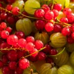 10 Incredibly Safe Berries to Eat In The Wild